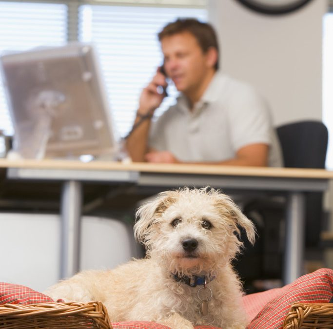 Cleaning a Pet Friendly Office