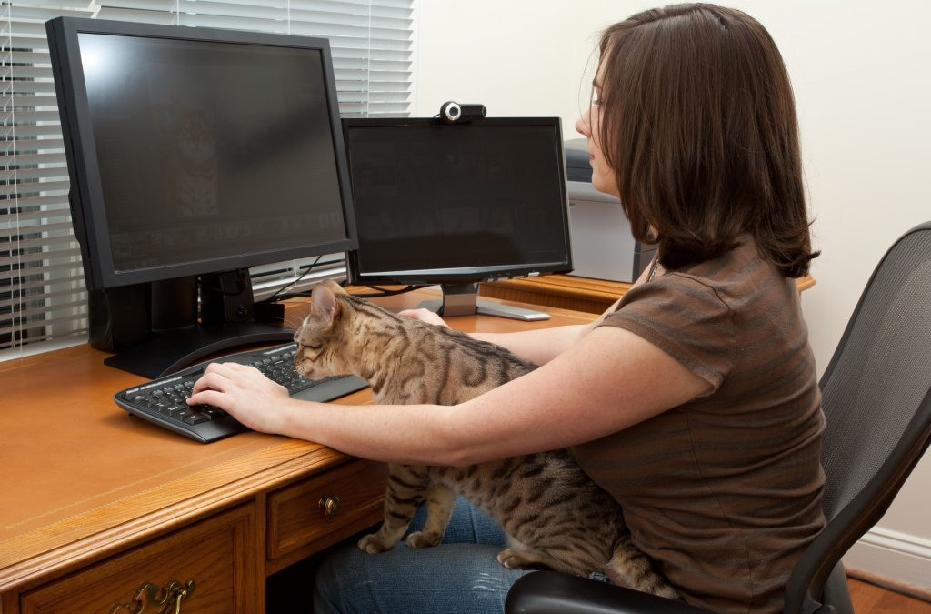 Keeping Your Pet Safe At The Office