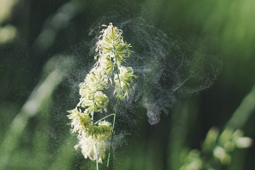Close up of a plant with pollen being seen surrounding it