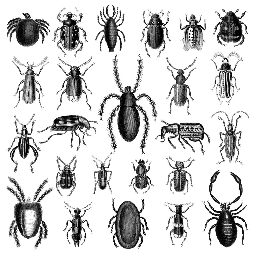 Images of all different bugs.