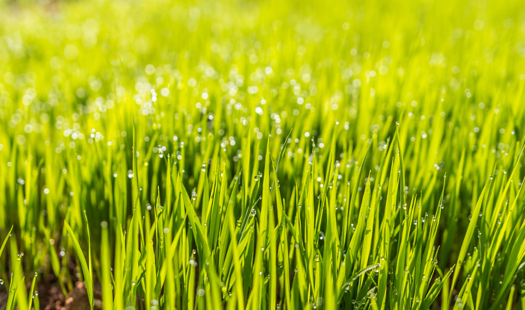 Caring for Your Grass During Summer Heat .