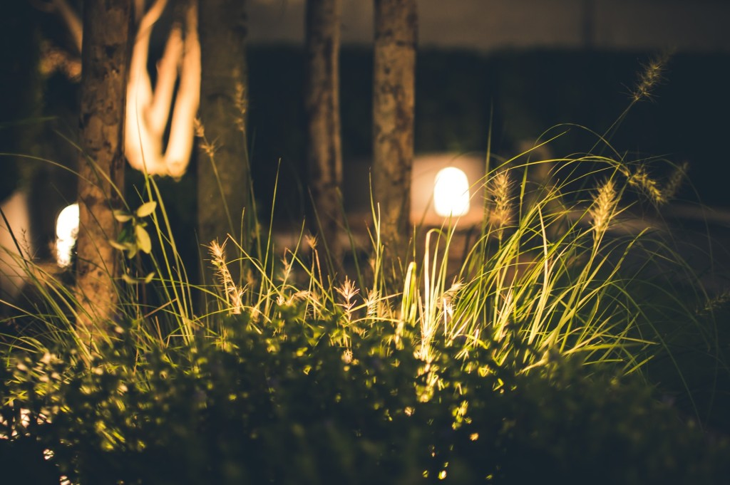 Image of grass and base of trees with electric low voltage lights at night.