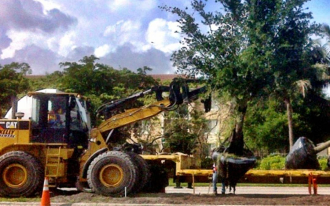 Tree Succession Project